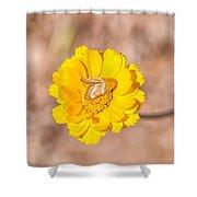 Desert-marigold Moth Shower Curtain