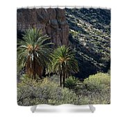 Desert Palms Shower Curtain