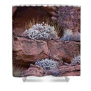 Desert Plant Life Shower Curtain