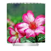 Desert Rose At Kualoa Shower Curtain