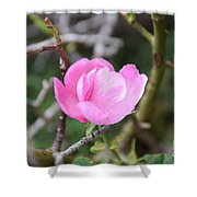 Desert Rose II Shower Curtain