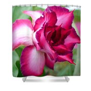 Desert Rose Shower Curtain
