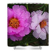 Desert Roses In Purple And Pink Shower Curtain