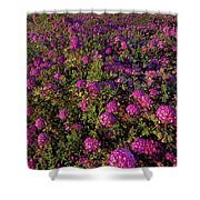 Desert Sand Verbena Wildflowers Shower Curtain