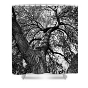 Desert Shade Shower Curtain