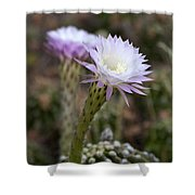 Desert Song Shower Curtain