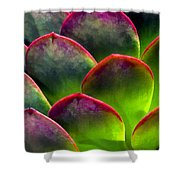 Desert Succulent In Bright Sun And Shade Shower Curtain