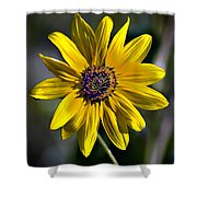 Desert Sunflower Shower Curtain