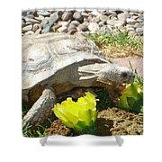 Desert Tortoise Delight Shower Curtain