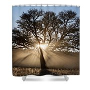 Desert Tree Shower Curtain