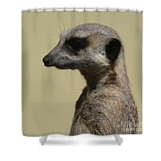Desultory Meerkat Shower Curtain