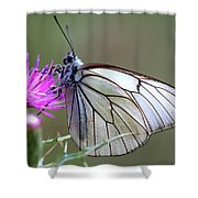 Detail Of A Butterfly In Alto Tajo Shower Curtain