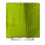 Detail Of Banana Leaf Andromeda Shower Curtain