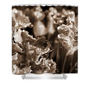 Details In The Dew Sepia Shower Curtain
