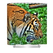 Determination In The Tigers Stare Shower Curtain