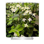 Devil Plant Shower Curtain