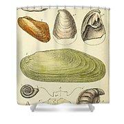 Devonian Fossils, Illustration Shower Curtain