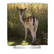 Devonshire Bambi  Shower Curtain