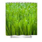 Dew Shower Curtain