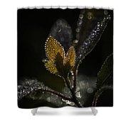 Dew Drops And Crystals Shower Curtain