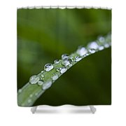 Dew Drops On Green Leaf Shower Curtain