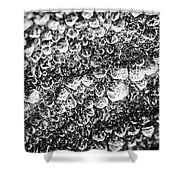 Dew Drops On Leaf Shower Curtain