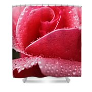Dew Drops On Pink Shower Curtain