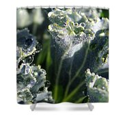 Dew Drops On Silvery Frill Shower Curtain