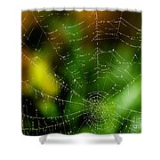 Dew Drops On Spider Web  Shower Curtain