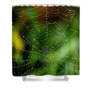 Dew Drops On Spider Web 3 Shower Curtain