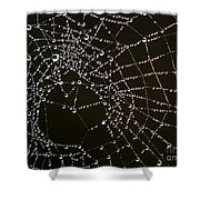 Dew Drops On Spider Web 4 Shower Curtain
