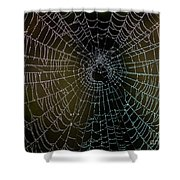 Dew Drops On Spider Web 5 Shower Curtain