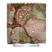 Dew Drops On The Rose Leaves Shower Curtain