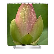 Dew Kissed Shower Curtain