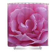 Dew Kissed Rose Shower Curtain