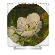 Dew Of Pear's Blooms Shower Curtain