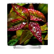 Dew On Autumn Leaves Shower Curtain