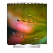 Dew On Azalea Flower Shower Curtain