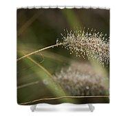 Dew On Ornamental Grass No. 1 Shower Curtain