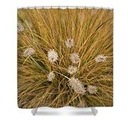 Dew On Ornamental Grass No. 3 Shower Curtain