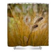 Dew On Ornamental Grass No. 4 Shower Curtain