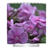 Dew On Phlox Shower Curtain