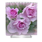 Dew On The Roses Shower Curtain