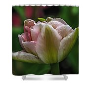 Dew On The Tulip Shower Curtain