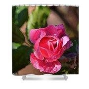 Dew Rose Shower Curtain