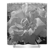 Dew Rose Shower Curtain