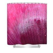 Dewdrops On Petal Shower Curtain