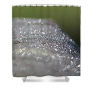 Dewdrops On Wyoming's Leaves Shower Curtain by J McCombie