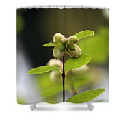 Dewey Buds Shower Curtain