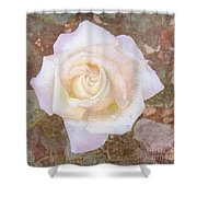 Dewy Dawn Peace Rose Shower Curtain